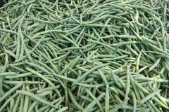 Escaninho de feijões verdes Imagens de Stock Royalty Free