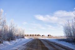Escaninhos velhos da grão da fileira no inverno Fotografia de Stock Royalty Free