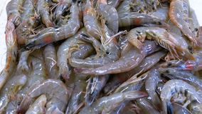 Escaparate con los cangrejos en el hielo del mercado callejero metrajes