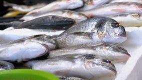 Escaparate con los pescados de mar frescos en hielo en el mercado callejero metrajes