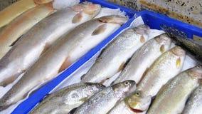 Escaparate con los pescados de mar frescos en hielo en el mercado callejero almacen de metraje de vídeo