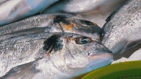Escaparate con los pescados frescos de la trucha de mar en hielo en el mercado callejero almacen de video