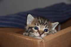 Escape de Kittentraz: Kitten Feeding Angst órfão foto de stock