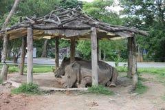 Escape de la mentira de los rinocerontes el calor Imágenes de archivo libres de regalías