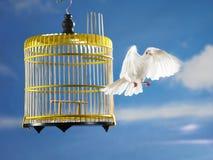 Escape de la paloma de la jaula para la libertad Imágenes de archivo libres de regalías
