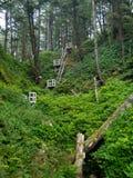 Escape de la selva Foto de archivo