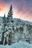 Escape no inverno fotos de stock