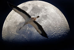 Escape to the Moon Royalty Free Stock Photography