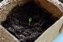 Escape verde en el pote de la turba Fotos de archivo libres de regalías