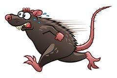 Escaping rat Stock Photo