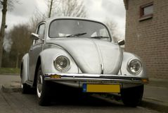 Escarabajo Imagenes de archivo