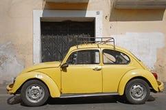Escarabajo amarillo imagenes de archivo