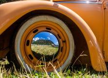 Escarabajo anaranjado en un día soleado Fotos de archivo