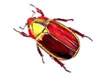 Escarabajo brillante dibujado con un bolígrafo en el papel, Foto de archivo