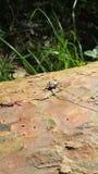 Escarabajo con el bigote largo en el árbol Fotografía de archivo