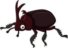 Escarabajo con el cuerno agudo aislado en el fondo blanco Foto de archivo libre de regalías