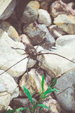 Escarabajo con las antenas largas retras Imágenes de archivo libres de regalías