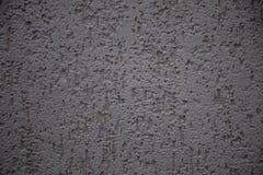Escarabajo de corteza del yeso Imagen de archivo libre de regalías