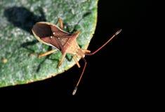 Escarabajo de la granja Foto de archivo
