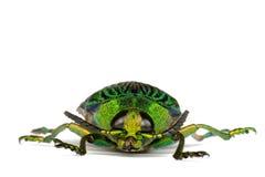Escarabajo de la joya Fotos de archivo libres de regalías