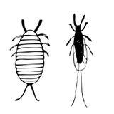 Escarabajo de la laca Fotografía de archivo