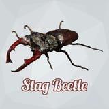 Escarabajo de macho del vector del polígono Imagen de archivo