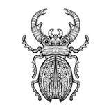 Escarabajo de macho gigante adornado Foto de archivo