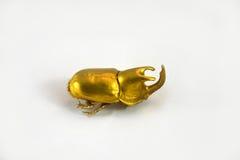 Escarabajo de oro Foto de archivo libre de regalías