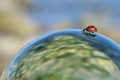 Escarabajo de señora Foto de archivo