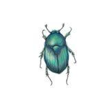 Escarabajo de Skarab Foto de archivo