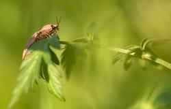 Escarabajo de tecleo Fotos de archivo