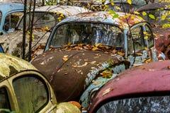 Escarabajo de VW del vintage - tipo I de Volkswagen - depósito de chatarra de Pennsylvania foto de archivo libre de regalías