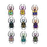 Escarabajo del color del vector Fotos de archivo
