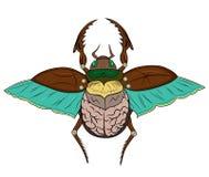 Escarabajo del escarabajo Foto de archivo libre de regalías