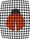 Escarabajo del Ladybug Imagenes de archivo