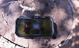 Escarabajo dentro del plástico transparente Detalles y primer fotografía de archivo libre de regalías