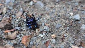 Escarabajo desamparado que miente en el suyo detrás almacen de metraje de vídeo