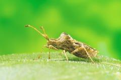 Escarabajo en la foto de la macro de la hoja Foto de archivo