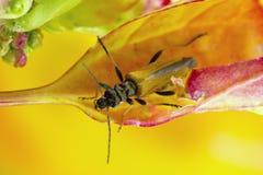 Escarabajo en la foto de la macro de la hoja Fotografía de archivo libre de regalías