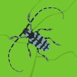 Escarabajo en la hoja Imagen de archivo
