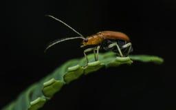 Escarabajo en la naturaleza Imagenes de archivo