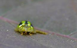 Escarabajo en la naturaleza Imagen de archivo