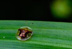 Escarabajo en la naturaleza Fotos de archivo
