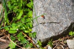 Escarabajo en la naturaleza de piedra de la planta verde imágenes de archivo libres de regalías