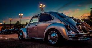 Escarabajo en la puesta del sol Fotografía de archivo