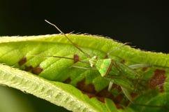 Escarabajo en Malasia Foto de archivo libre de regalías