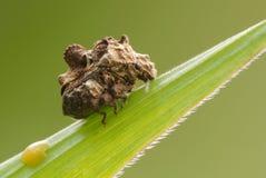 Escarabajo inusual Fotos de archivo