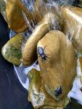 Escarabajo negro de piedra mojado Imagen de archivo libre de regalías