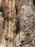 Escarabajo negro dos Fotografía de archivo libre de regalías