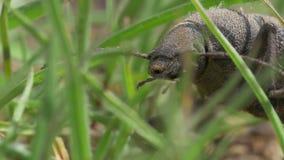 Escarabajo negro metrajes